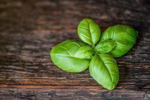 Basilic vert sur une table bois