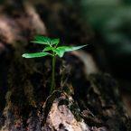 Comment Prendre Soin de l'Environnement, Avec de Simples Gestes du Quotidien ?